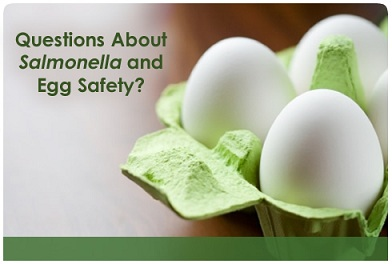 Post image for FoodSafety.gov answers questions about Salmonella and Egg Safety