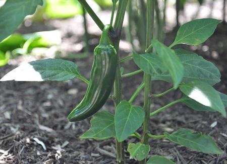 veggiegarden3
